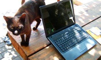 cica és laptop