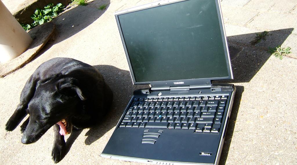 laptop kutya